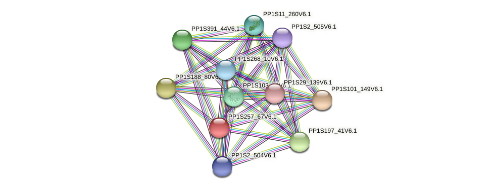 PP1S257_67V6.1 protein (Physcomitrella patens) - STRING interaction network