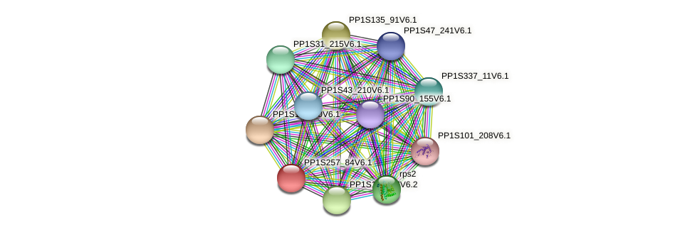 PP1S257_84V6.1 protein (Physcomitrella patens) - STRING interaction network