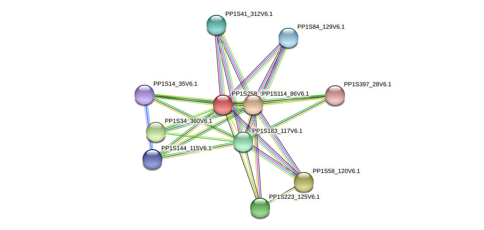 PP1S258_50V6.1 protein (Physcomitrella patens) - STRING interaction network
