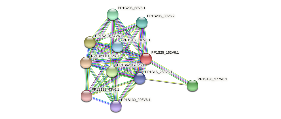 PP1S25_162V6.1 protein (Physcomitrella patens) - STRING interaction network