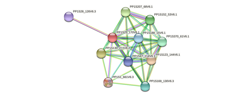 PP1S25_170V6.1 protein (Physcomitrella patens) - STRING interaction network