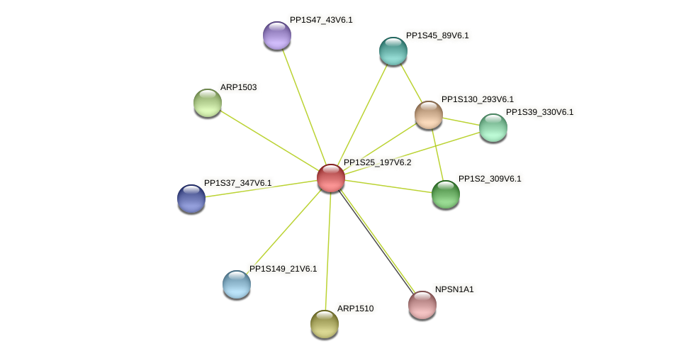 PP1S25_197V6.1 protein (Physcomitrella patens) - STRING interaction network