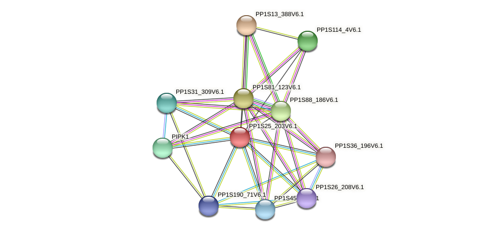 PP1S25_203V6.1 protein (Physcomitrella patens) - STRING interaction network