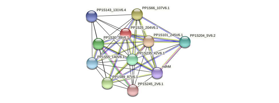 PP1S25_204V6.1 protein (Physcomitrella patens) - STRING interaction network