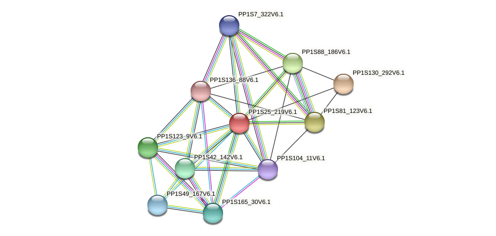 PP1S25_219V6.1 protein (Physcomitrella patens) - STRING interaction network