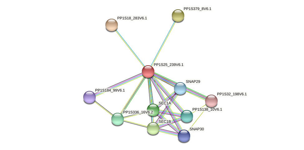 PP1S25_239V6.1 protein (Physcomitrella patens) - STRING interaction network