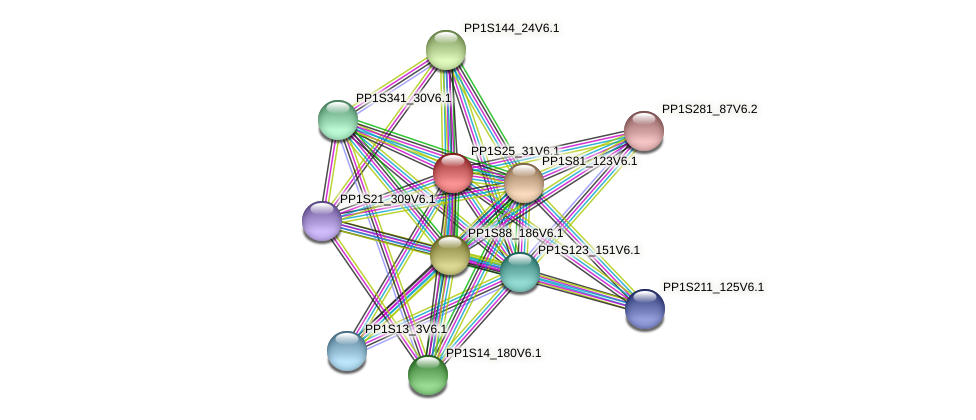PP1S25_31V6.1 protein (Physcomitrella patens) - STRING interaction network