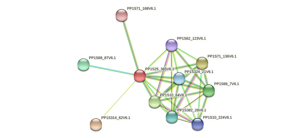 PP1S25_365V6.1 protein (Physcomitrella patens) - STRING interaction network