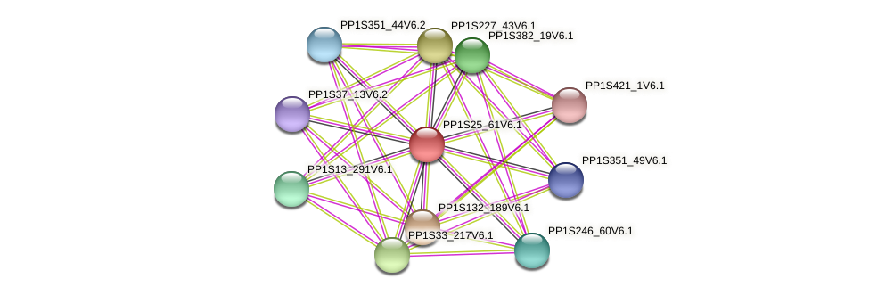 PP1S25_61V6.1 protein (Physcomitrella patens) - STRING interaction network