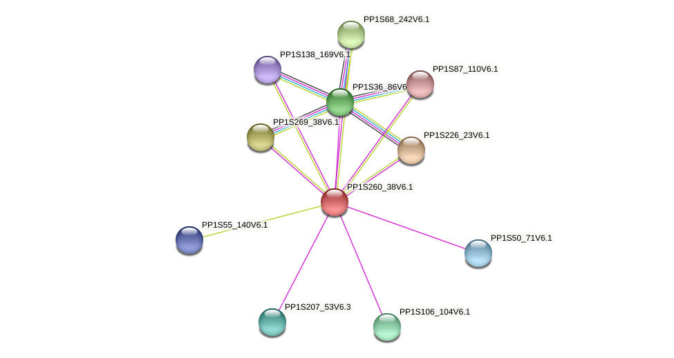 PP1S260_38V6.1 protein (Physcomitrella patens) - STRING interaction network