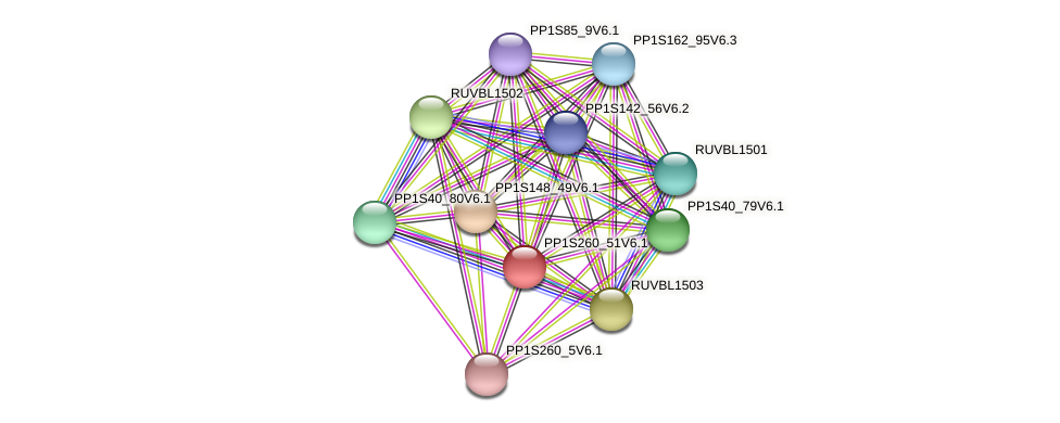 PP1S260_51V6.1 protein (Physcomitrella patens) - STRING interaction network
