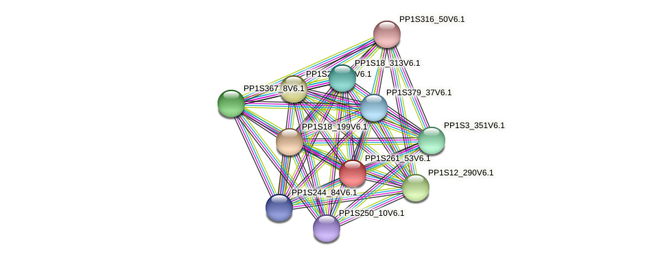 PP1S261_53V6.1 protein (Physcomitrella patens) - STRING interaction network