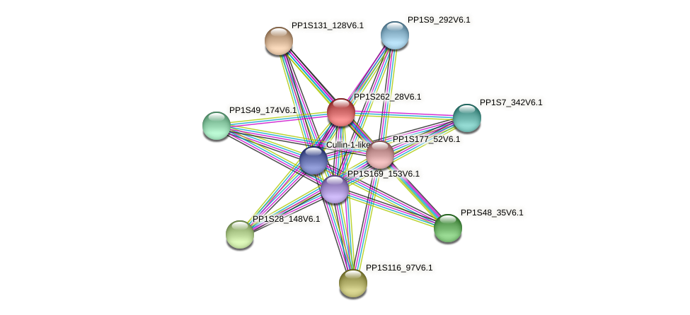 PP1S262_28V6.1 protein (Physcomitrella patens) - STRING interaction network