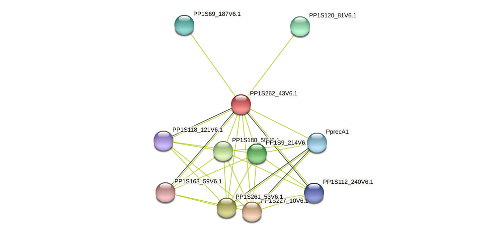 PP1S262_43V6.1 protein (Physcomitrella patens) - STRING interaction network