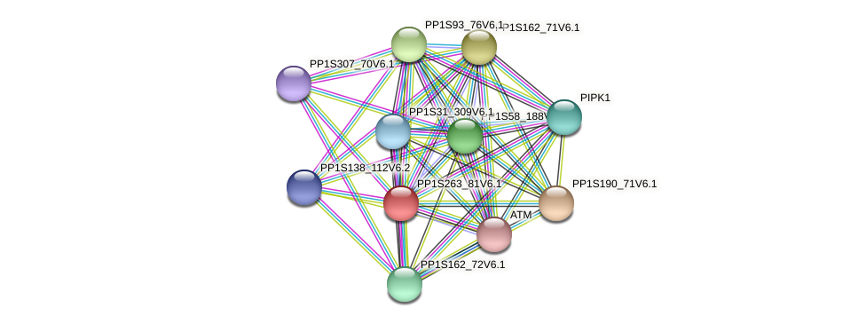 PP1S263_81V6.1 protein (Physcomitrella patens) - STRING interaction network