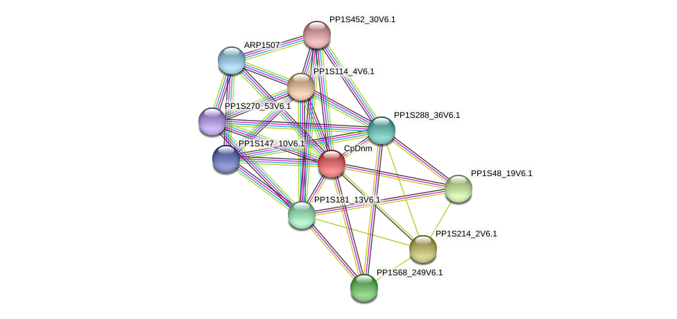 CpDnm protein (Physcomitrella patens) - STRING interaction network