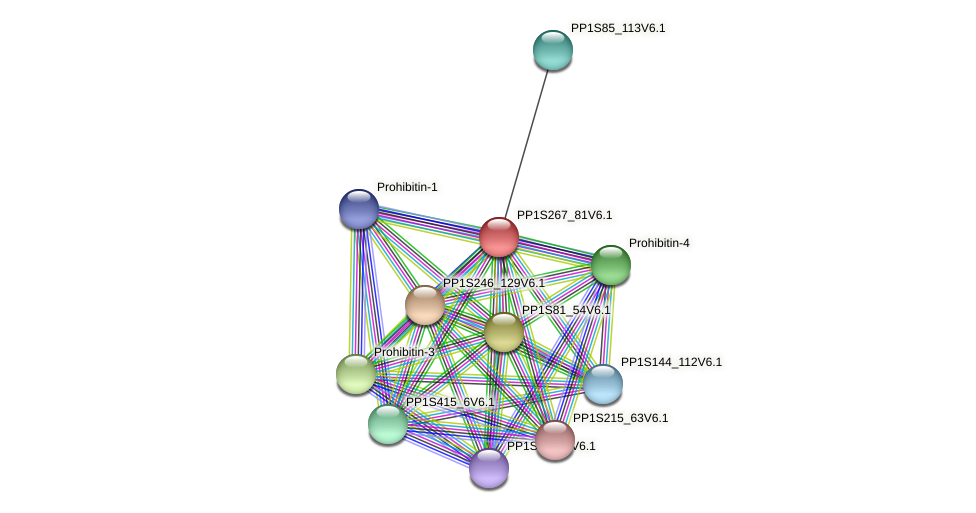 PP1S267_81V6.1 protein (Physcomitrella patens) - STRING interaction network