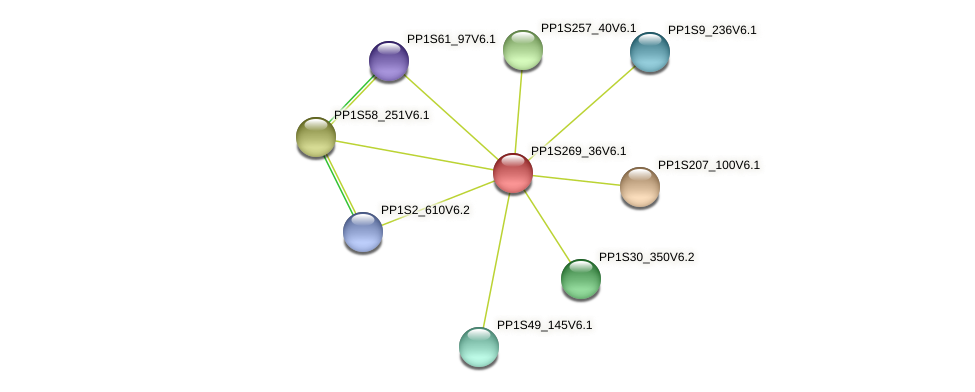 PP1S269_36V6.1 protein (Physcomitrella patens) - STRING interaction network