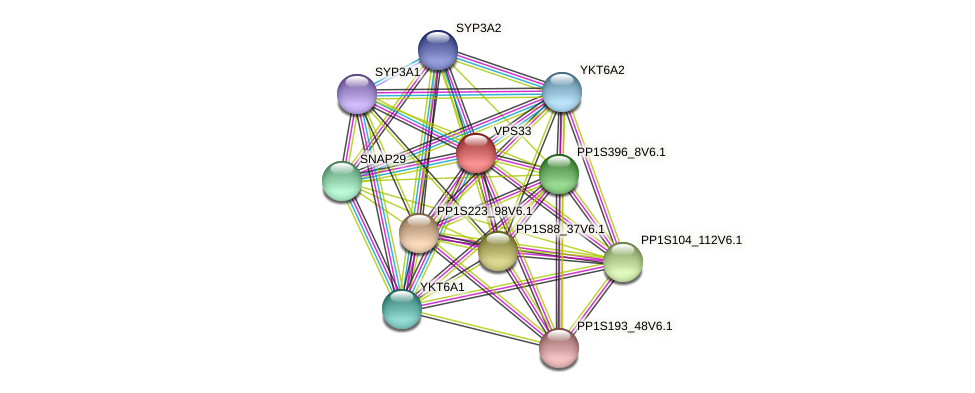 VPS33 protein (Physcomitrella patens) - STRING interaction network
