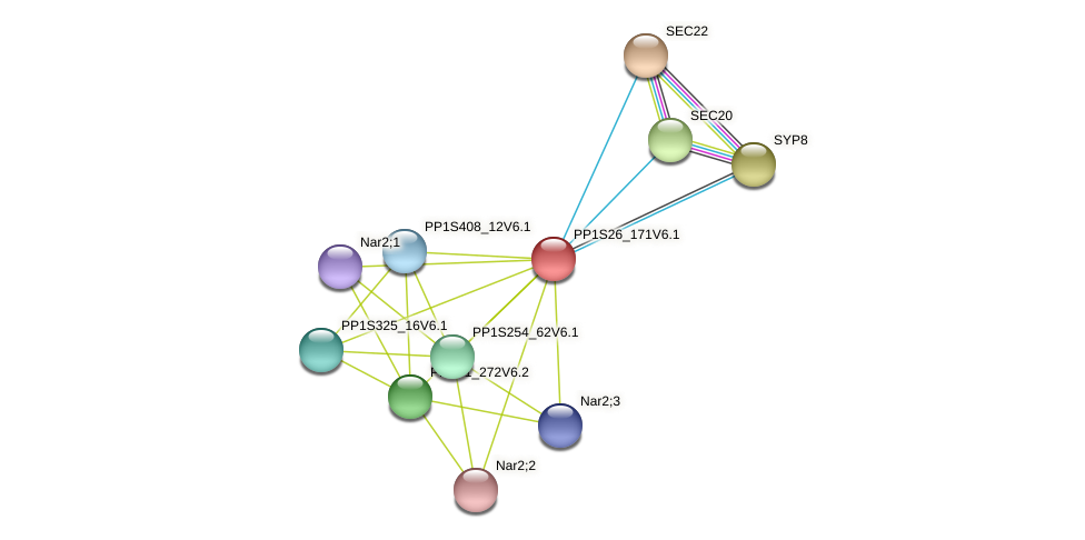 PP1S26_171V6.1 protein (Physcomitrella patens) - STRING interaction network