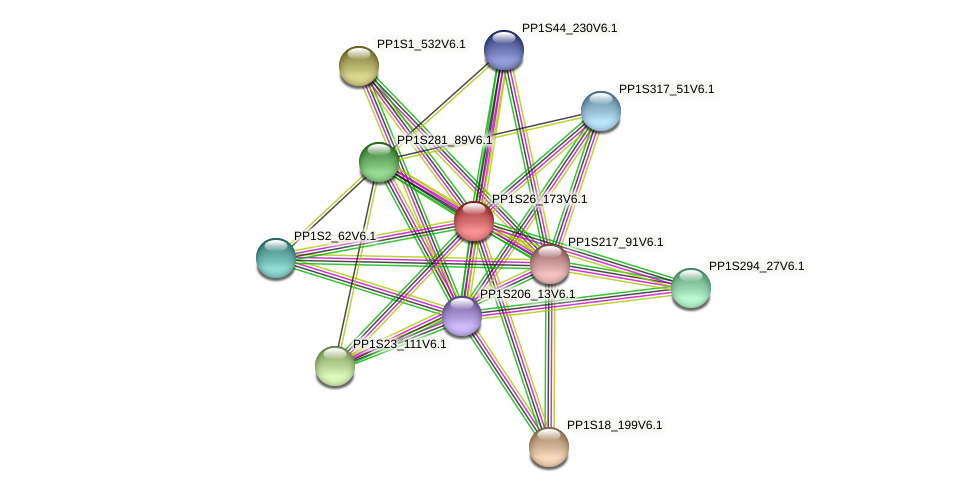 PP1S26_173V6.1 protein (Physcomitrella patens) - STRING interaction network