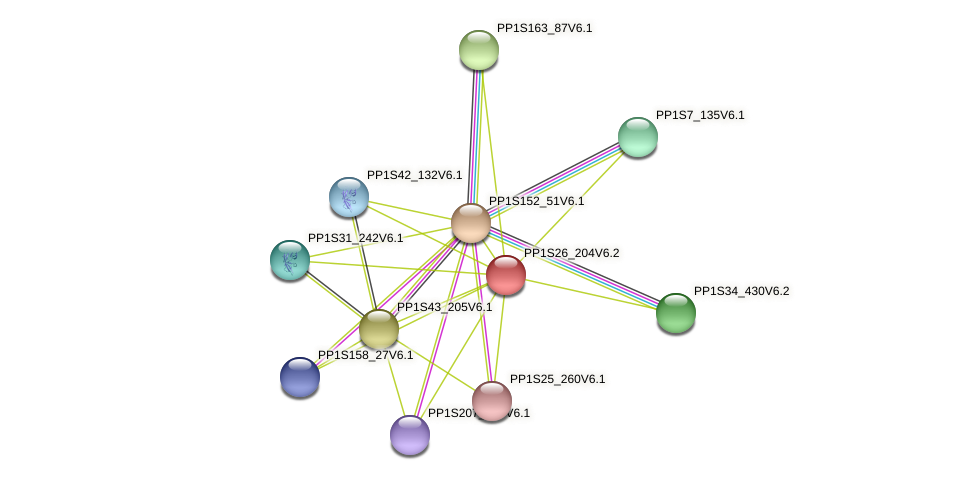 PP1S26_204V6.1 protein (Physcomitrella patens) - STRING interaction network