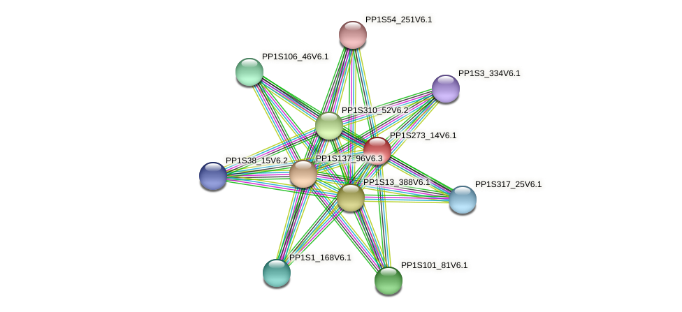 PP1S273_14V6.1 protein (Physcomitrella patens) - STRING interaction network
