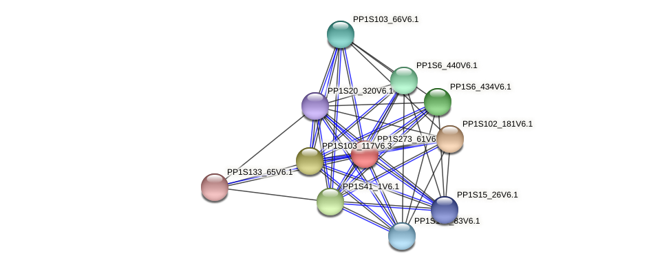 PP1S273_61V6.1 protein (Physcomitrella patens) - STRING interaction network