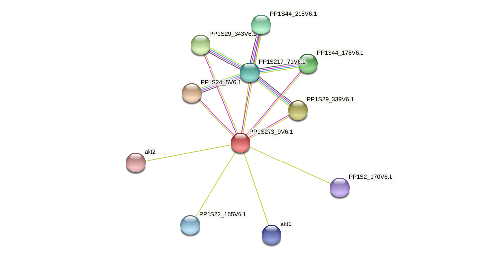 PP1S273_9V6.1 protein (Physcomitrella patens) - STRING interaction network