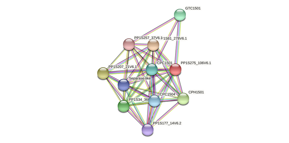 PP1S275_106V6.1 protein (Physcomitrella patens) - STRING interaction network