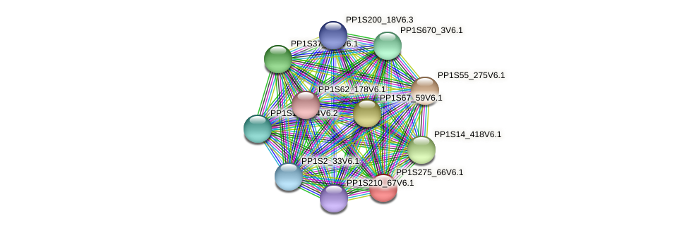 PP1S275_66V6.1 protein (Physcomitrella patens) - STRING interaction network