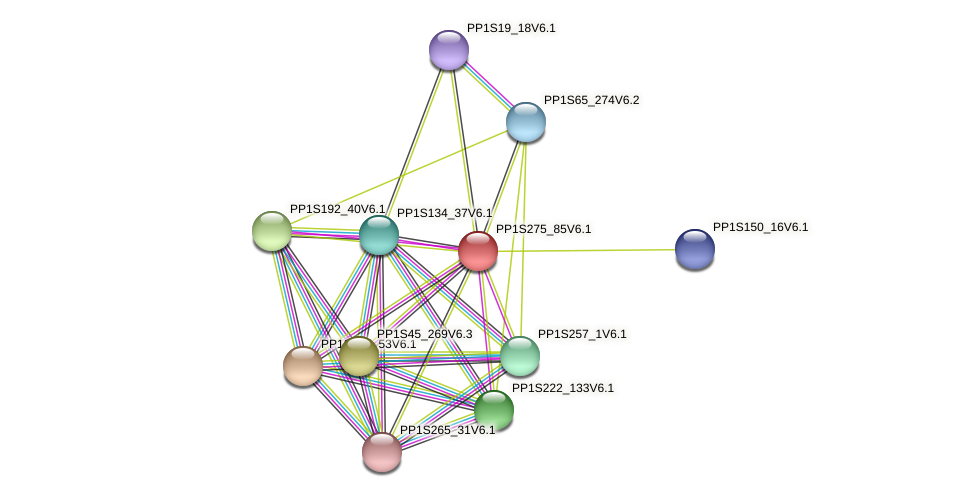 PP1S275_85V6.1 protein (Physcomitrella patens) - STRING interaction network