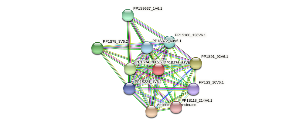 PP1S276_53V6.1 protein (Physcomitrella patens) - STRING interaction network