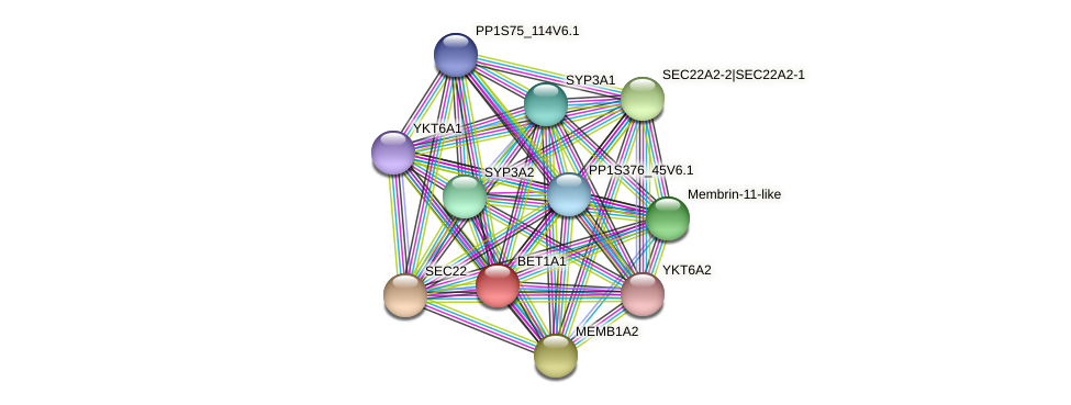 BET1A1 protein (Physcomitrella patens) - STRING interaction network