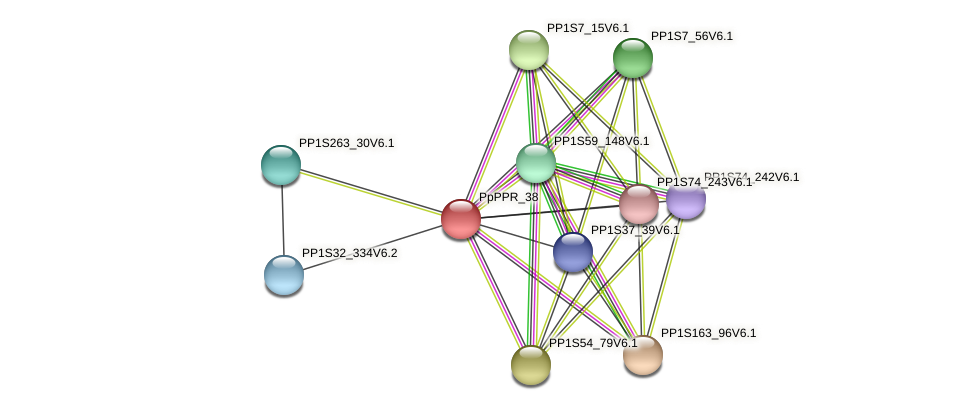 PpPPR_38 protein (Physcomitrella patens) - STRING interaction network