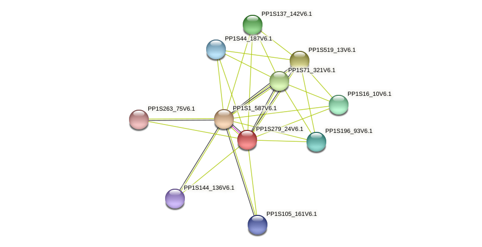 PP1S279_24V6.1 protein (Physcomitrella patens) - STRING interaction network