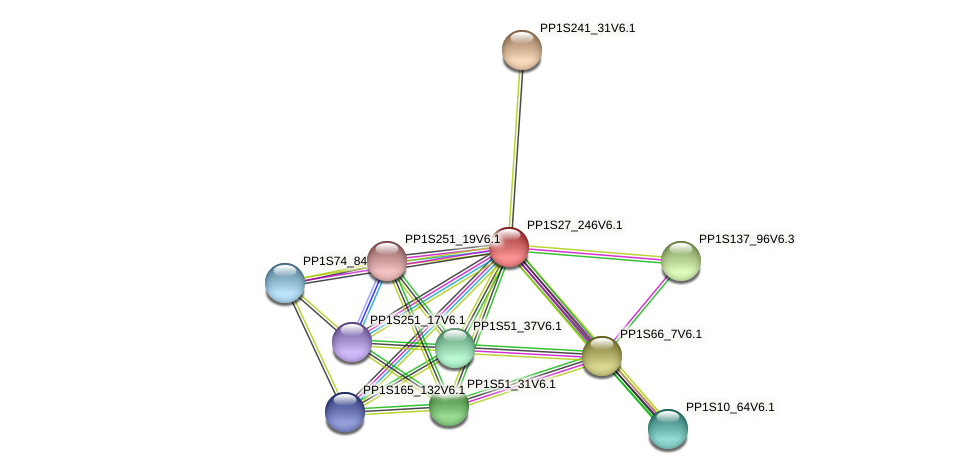 PP1S27_246V6.1 protein (Physcomitrella patens) - STRING interaction network