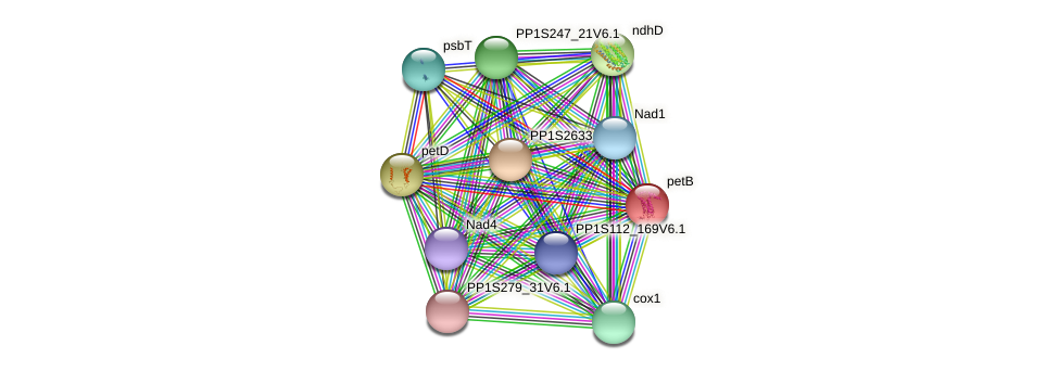 petB protein (Physcomitrella patens) - STRING interaction network