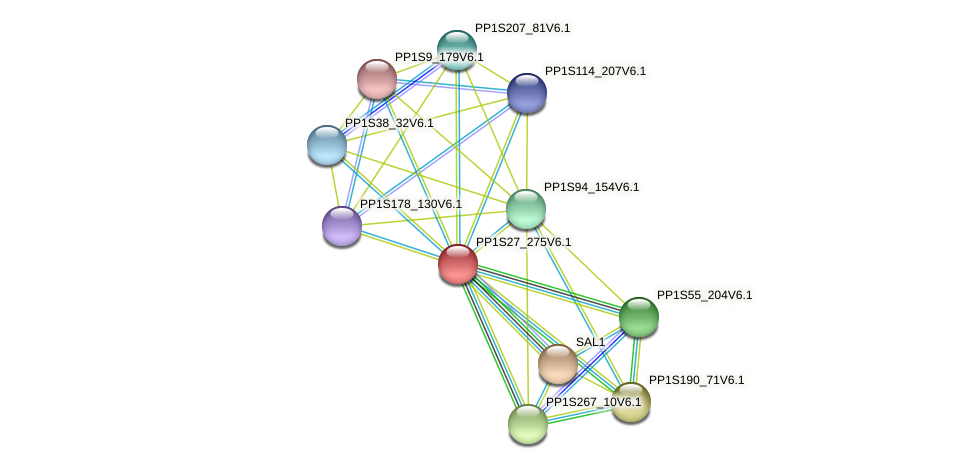 PP1S27_275V6.1 protein (Physcomitrella patens) - STRING interaction network