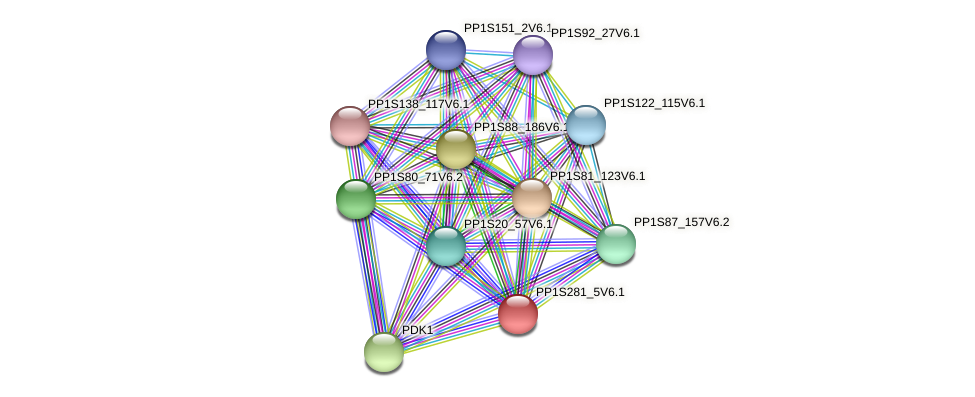 PP1S281_5V6.1 protein (Physcomitrella patens) - STRING interaction network