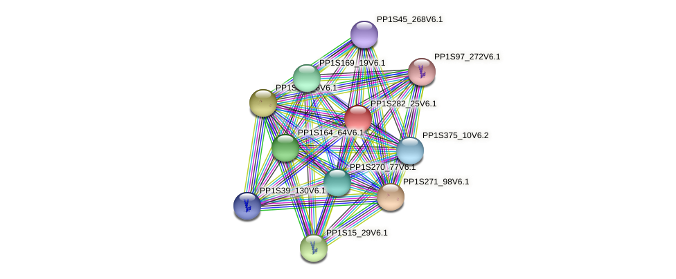 PP1S282_25V6.1 protein (Physcomitrella patens) - STRING interaction network