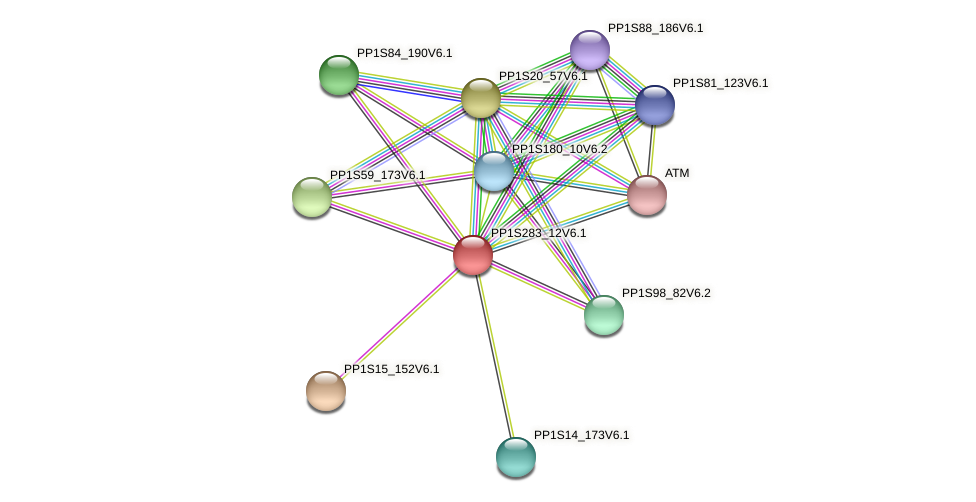 PP1S283_12V6.1 protein (Physcomitrella patens) - STRING interaction network