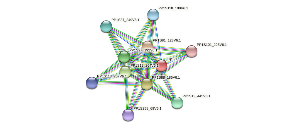 Gip1-1 protein (Physcomitrella patens) - STRING interaction network
