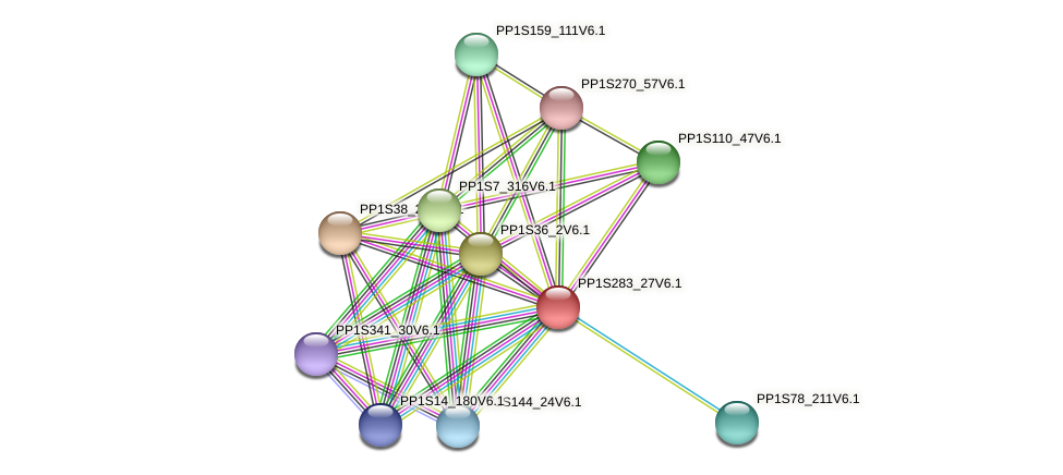 PP1S283_27V6.1 protein (Physcomitrella patens) - STRING interaction network