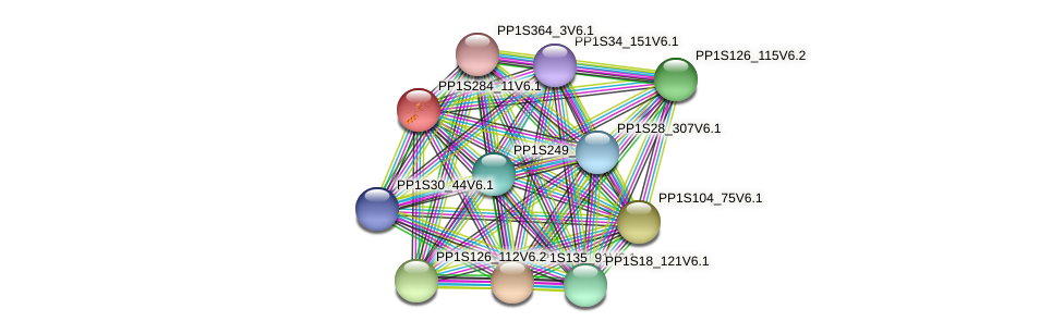 PP1S284_11V6.1 protein (Physcomitrella patens) - STRING interaction network