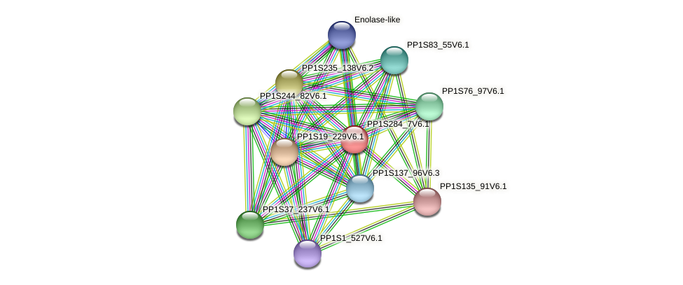 PP1S284_7V6.1 protein (Physcomitrella patens) - STRING interaction network