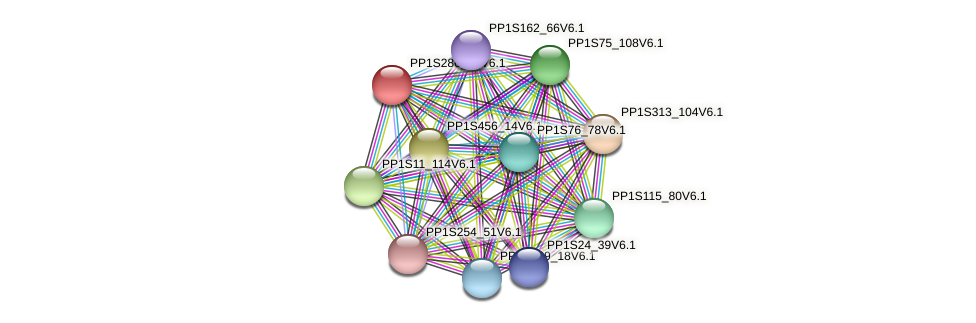 PP1S286_36V6.1 protein (Physcomitrella patens) - STRING interaction network