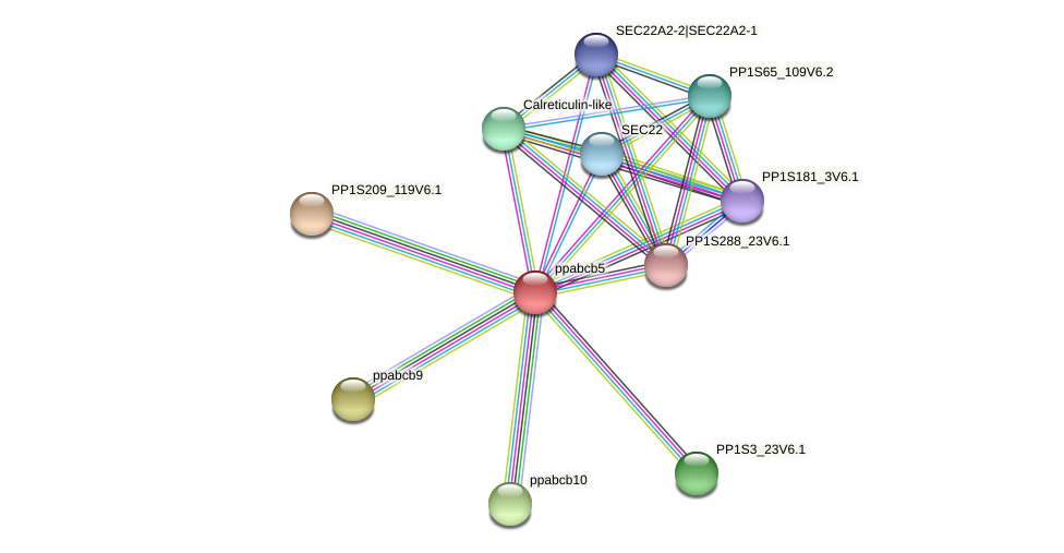 ppabcb5 protein (Physcomitrella patens) - STRING interaction network