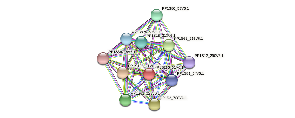 PP1S286_51V6.1 protein (Physcomitrella patens) - STRING interaction network