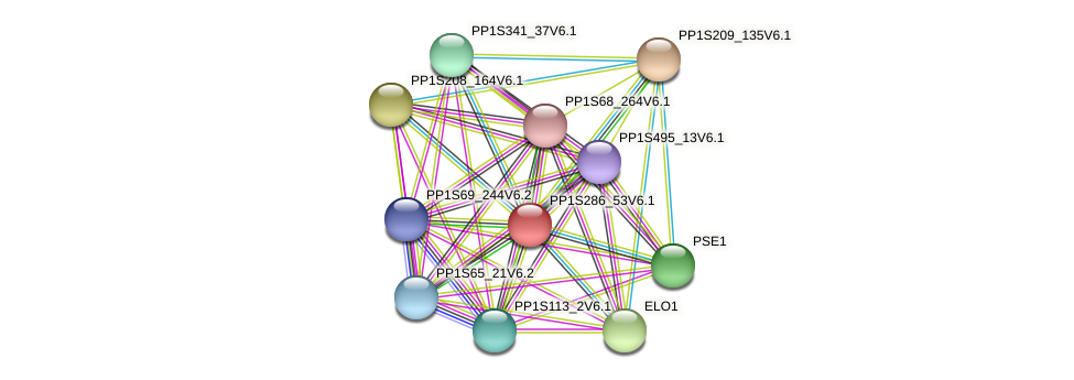 PP1S286_53V6.1 protein (Physcomitrella patens) - STRING interaction network